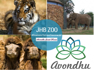 Avondhu Guest House is 4 minutes from the Johannesburg (JHB) Zoo